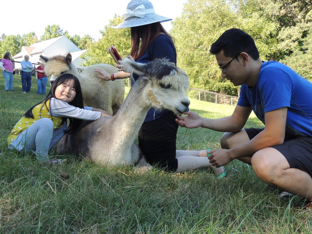 Alpaca Lane Criations: 15430 Mount Calvert Rd, Upper Marlboro, MD
