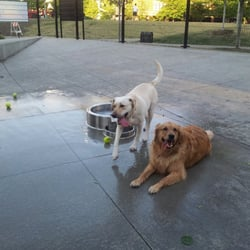 Dog Parks Near Peoria Il