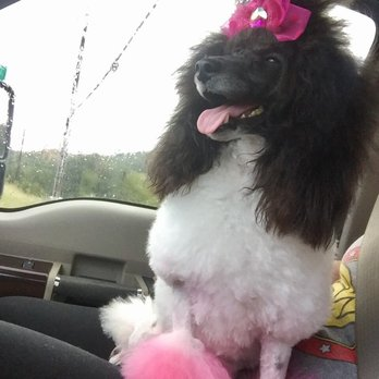 Puppy Love Dog Grooming - 58 Photos & 28 Reviews - Pet