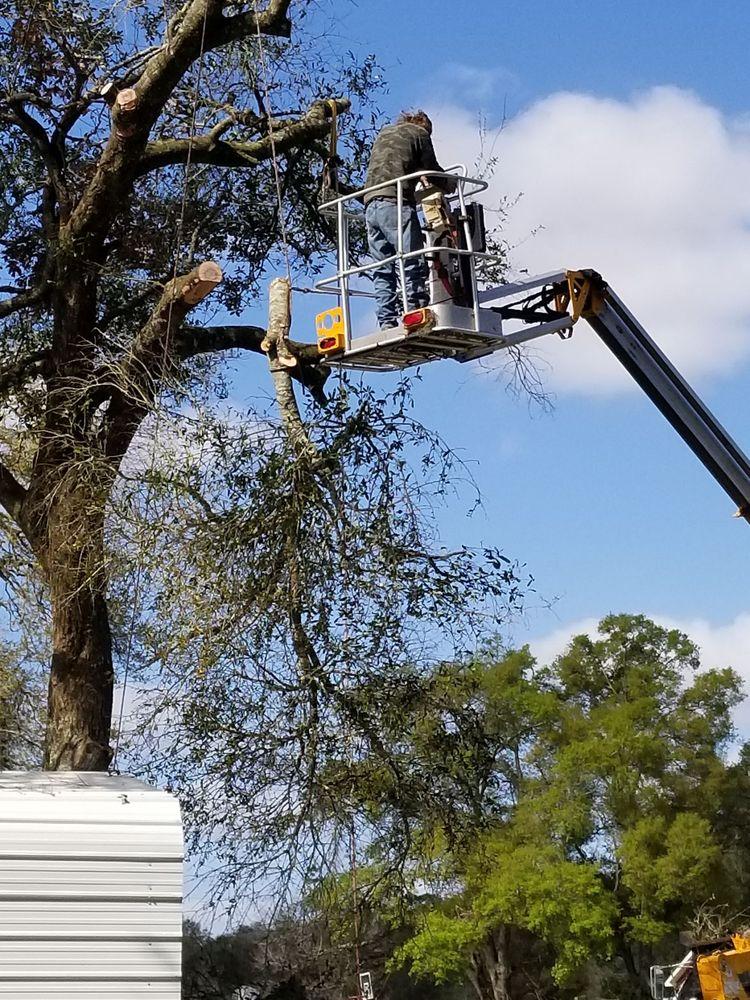 DTS Tree Service: Lake Helen, FL