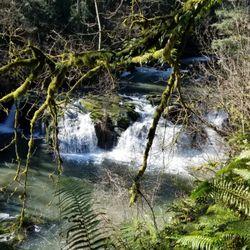 Lacamas Creek Trail - (New) 73 Photos & 24 Reviews - Hiking