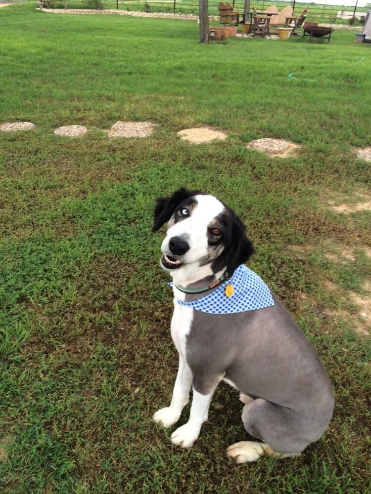 The Dog House: 1412 Simmons Ave, Jourdanton, TX