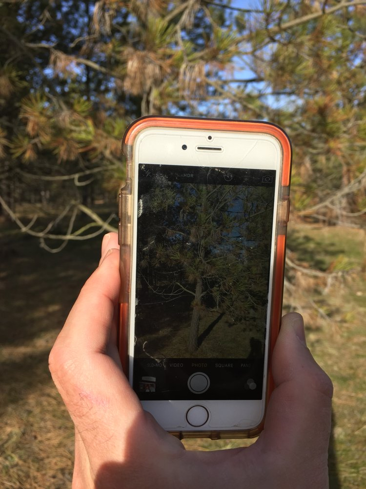 Arborist Tree On Demand: Cheney, WA