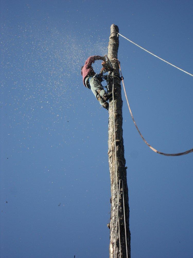 Amigo Tree Service Removal Stump Grinding Cary NC