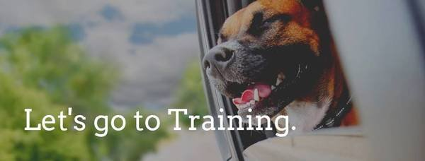 Bone-a-Fide Dog Training: Manteca, CA
