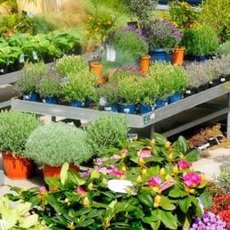 Aquiflor jardinerie aquatique 20 22 rue de la for Jardinerie aquatique