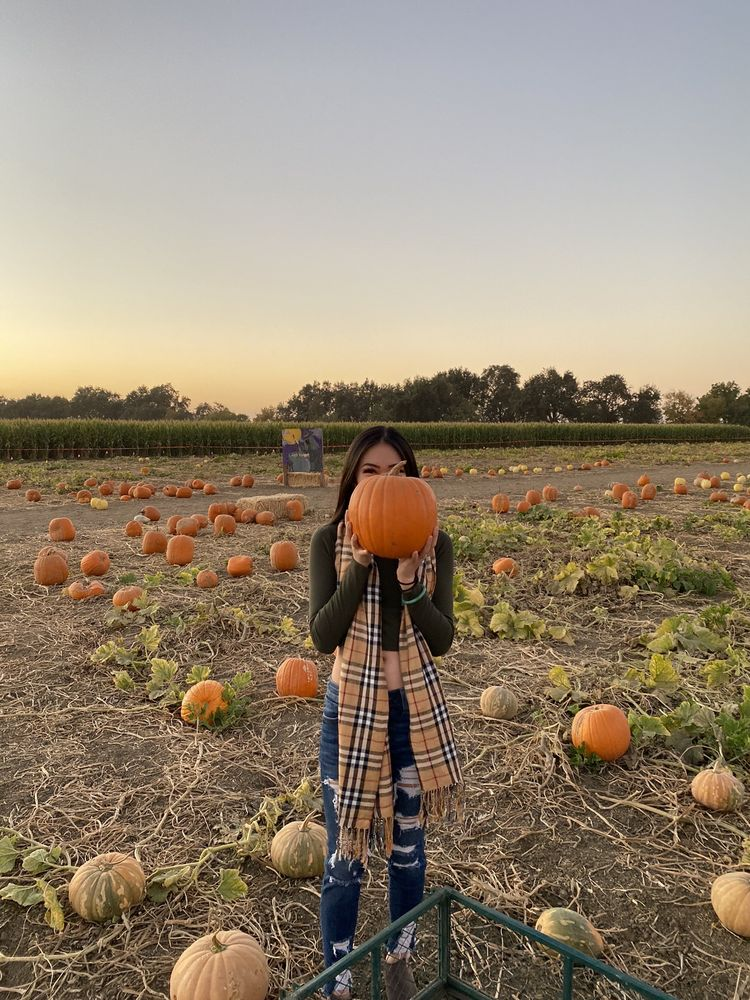 Bobby Dazzler's Pumpkin Patch and Milo Maze: 23300 County Rd 99D, Woodland, CA