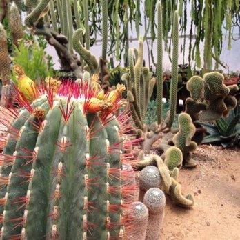 Photo Of Poot S Cactus Nursery Ripon Ca United States