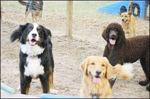 Paradise for Pets: 12561 Old Gunpowder Rd Spur, Beltsville, MD