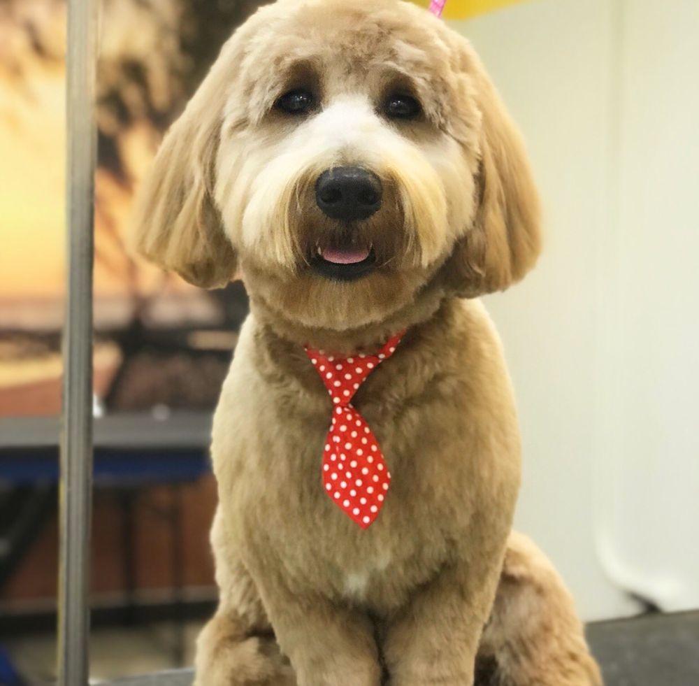 Patty's Pups: 5045 Fox Ln, Gurnee, IL