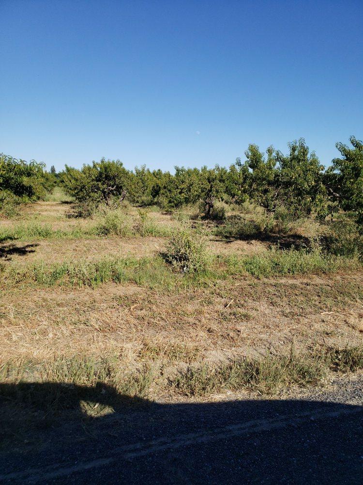 Manas Ranch: 25838 County Road 21A, Esparto, CA