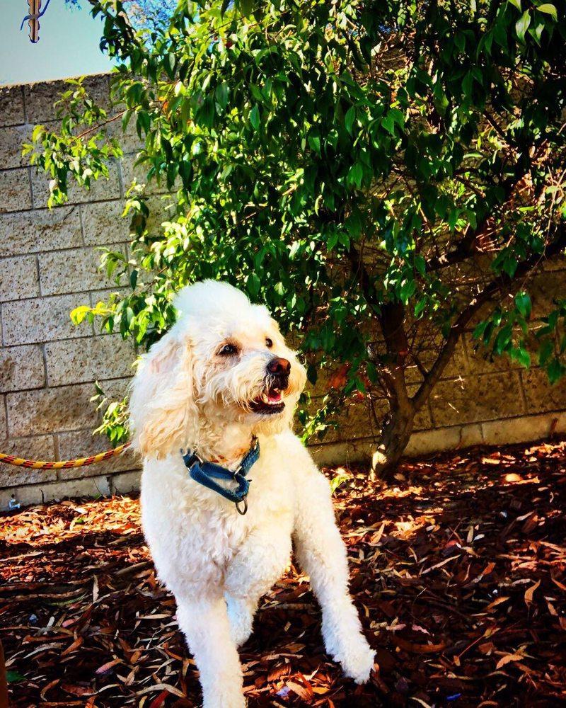 Pet Express: 100 Northhill Dr, Brisbane, CA