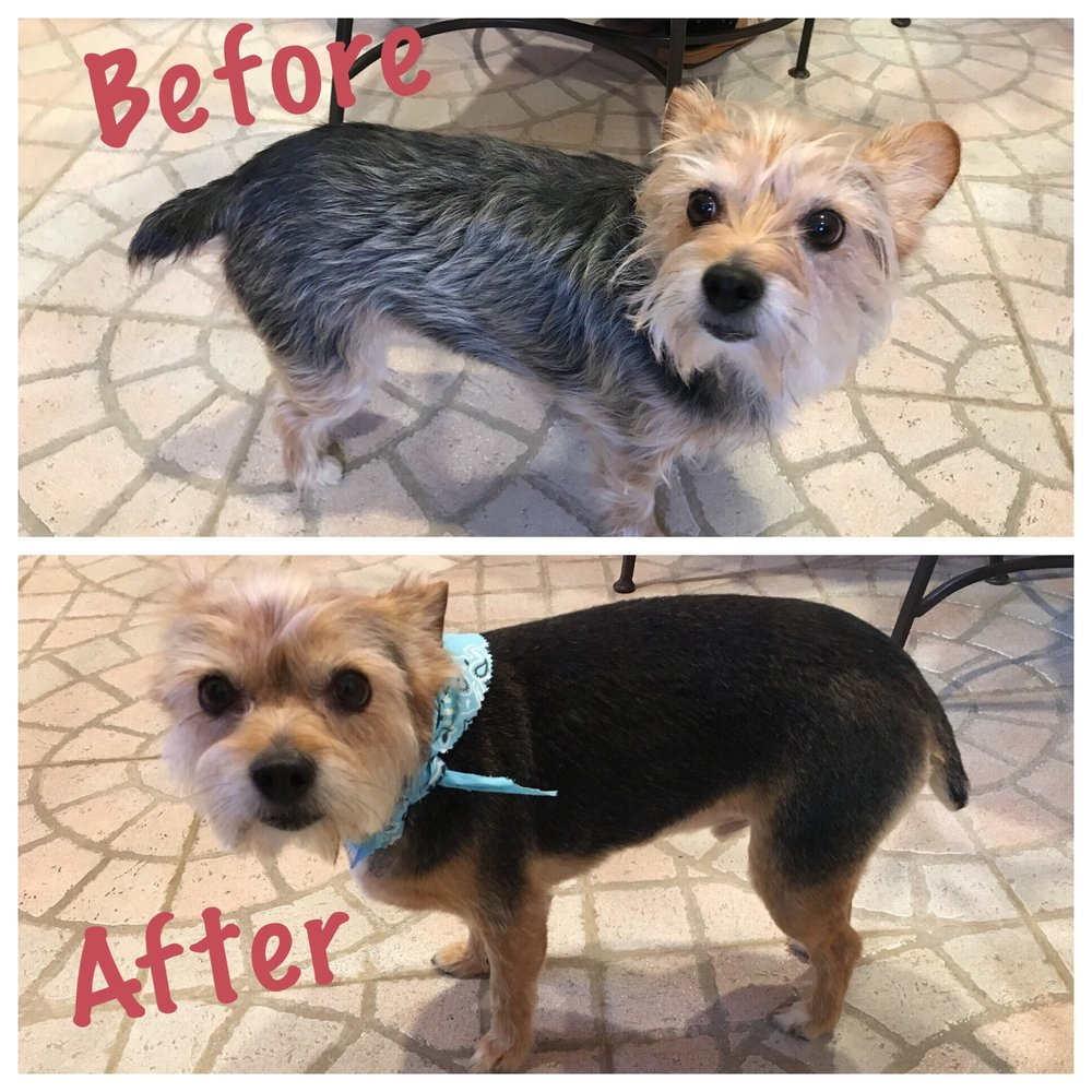 Plush Pups Boutique and Grooming: 2335 Huntingdon Pike, Huntingdon Valley, PA