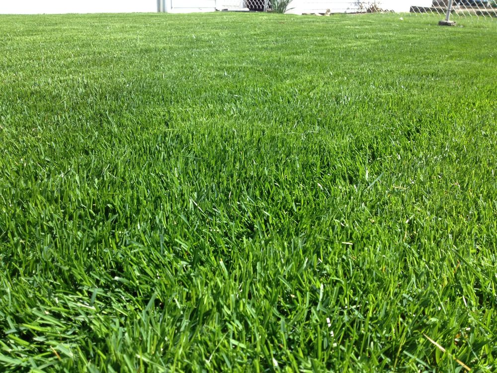 TML Mowing Company: 9343 S Troy Ave, Evergreen Park, IL