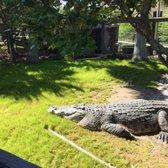 Alligator Park Myrtle Beach Hours