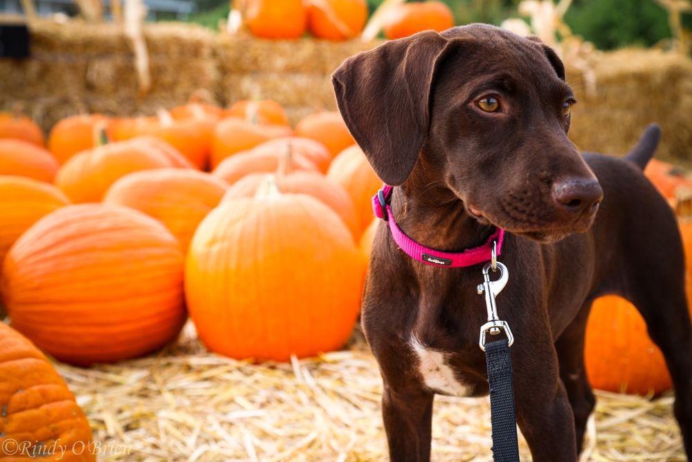 Plush Puppy Dog Grooming: 325 Pine St, Galt, CA