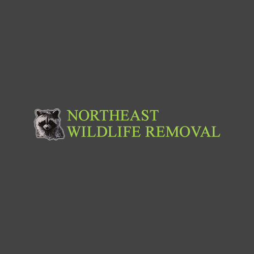Northeast Wildlife Removal: N10320 Thompson Ln, Wausaukee, WI