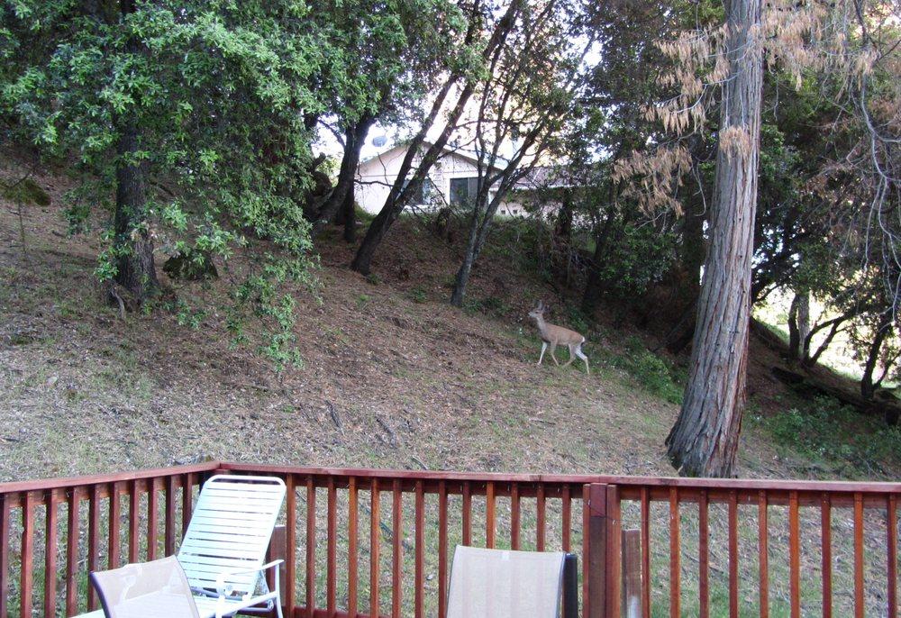 The Yosemite Vacation Haus: 51815 Ponderosa Way, Oakhurst, CA