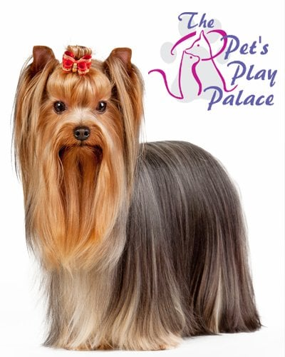 The Pet's Play Palace