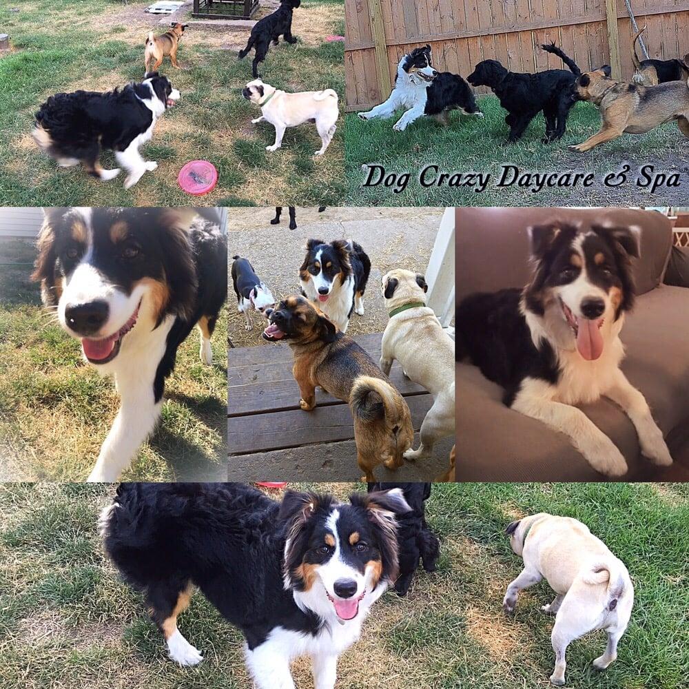 Dog Crazy Daycare & Spa: 4372 Batavia Elba Tl Rd, Batavia, NY