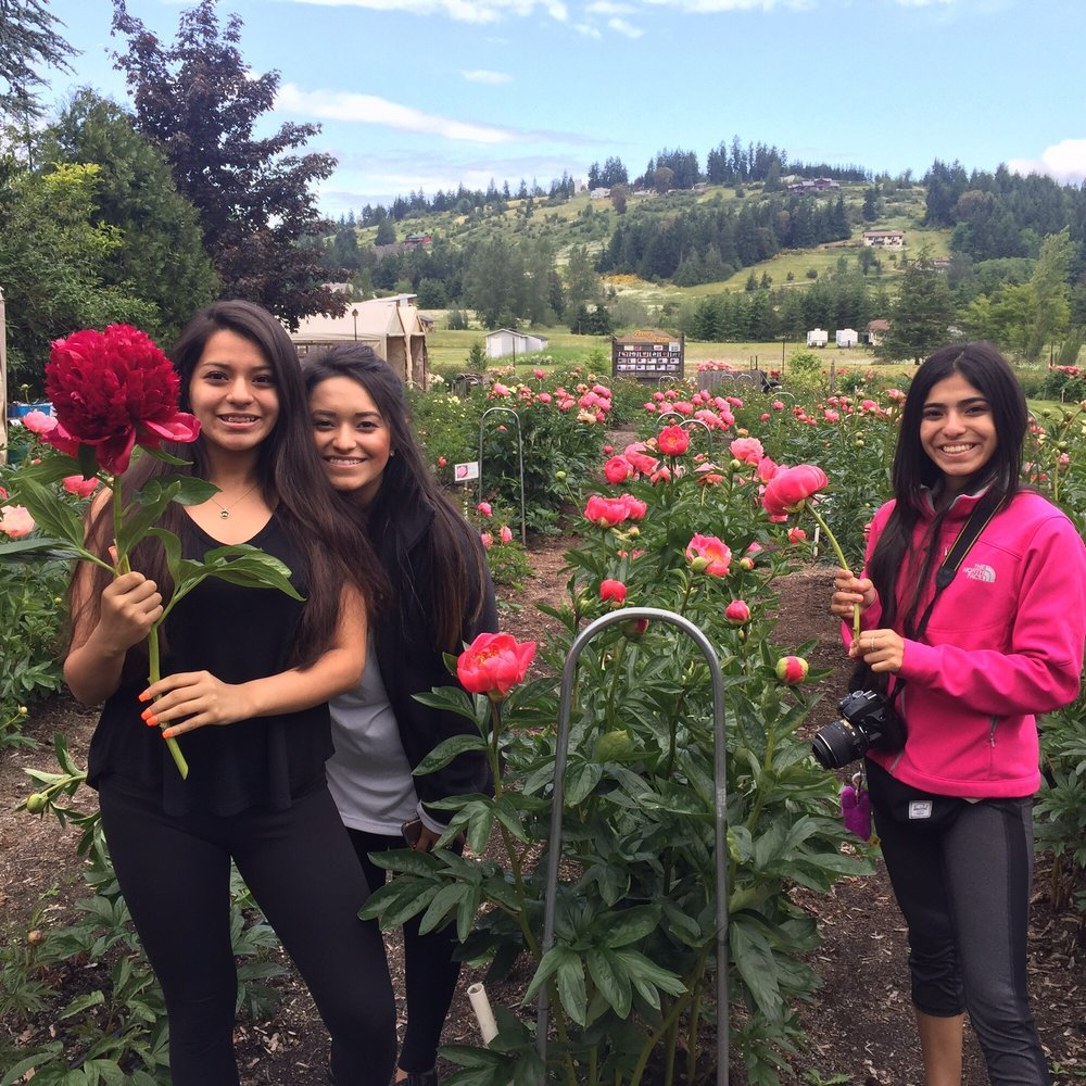 Photo of Peony Farm: Sequim, WA