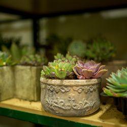 United Wholesale Flowers - 604 Photos & 69 Reviews - Wholesale ... on