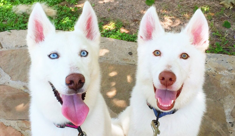 Canine Coiffure: 5800 N Houston Rosslyn Rd, Houston, TX