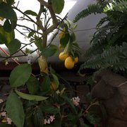 ... Photo Of Tioga Gardens   Owego, NY, United States ...