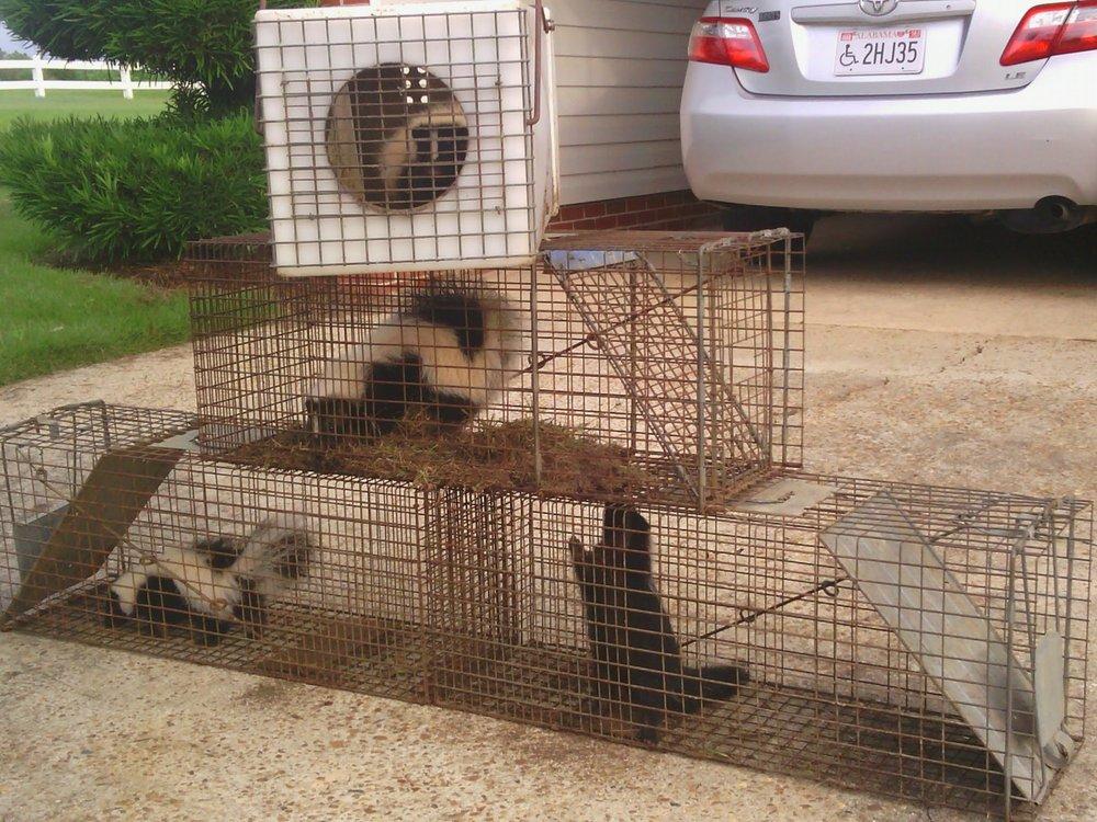 Critter Getter: Daleville, AL