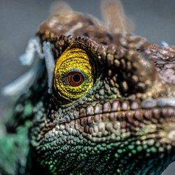 JTK Reptiles - 1631 Photos & 123 Reviews - Reptile Shops