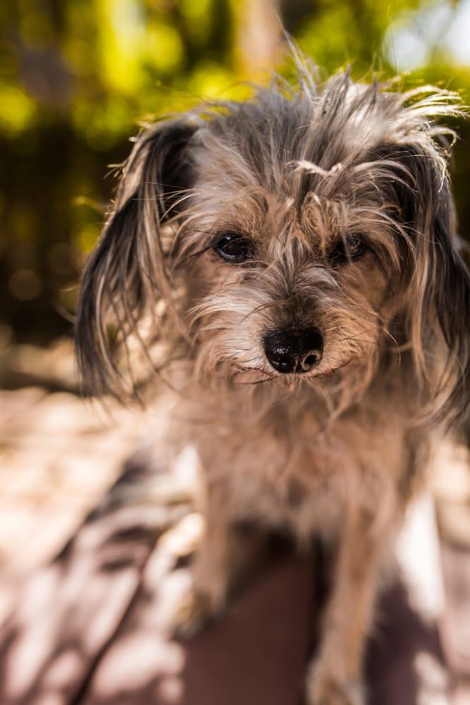 Wigglewag Training Dog Services Pasadena Ca