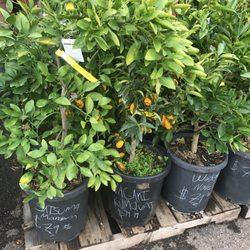 Photo Of Deep Roots Garden Center And Florist   Manhattan Beach, CA, United  States ...