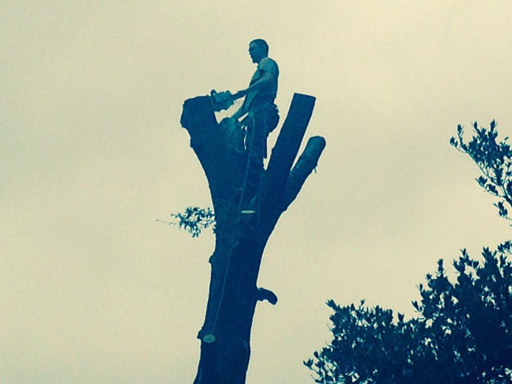 Sawyer Tree and Yard: Ben Lomond, CA