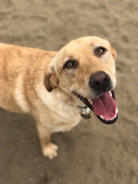 The Dog House Bay Area: Montara, CA