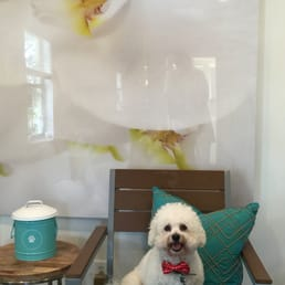 orchid island dog spa
