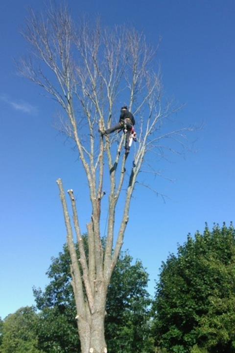 Axe Tree Service/ Axe Sustainable Woodcraft: W8495 Oakridge Rd, Conrath, WI