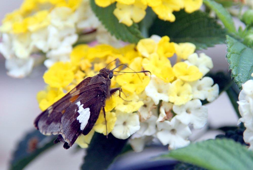 Hubbs Greenhouse: 1003 E Grant Hwy, Marengo, IL