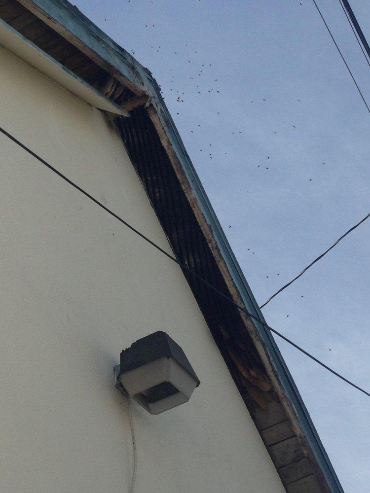 1st Stryke Pest & Termite Control - 82 Photos & 163 Reviews - Pest ...