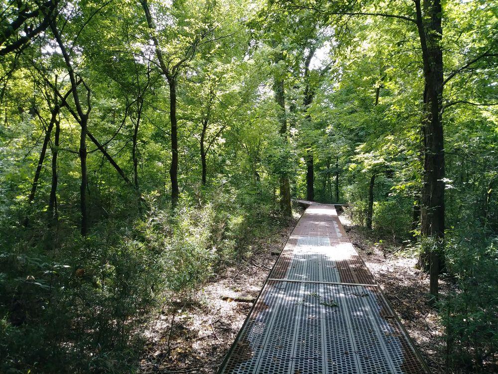 Big Oak Tree State Park: 13640 S Highway 102, East Prairie, MO
