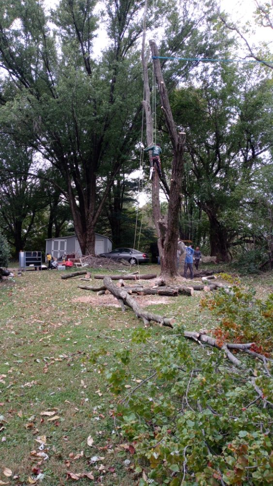Marcell Landscaping and Tree Service: 18411 Honeylocust Cir, Gaithersburg, MD