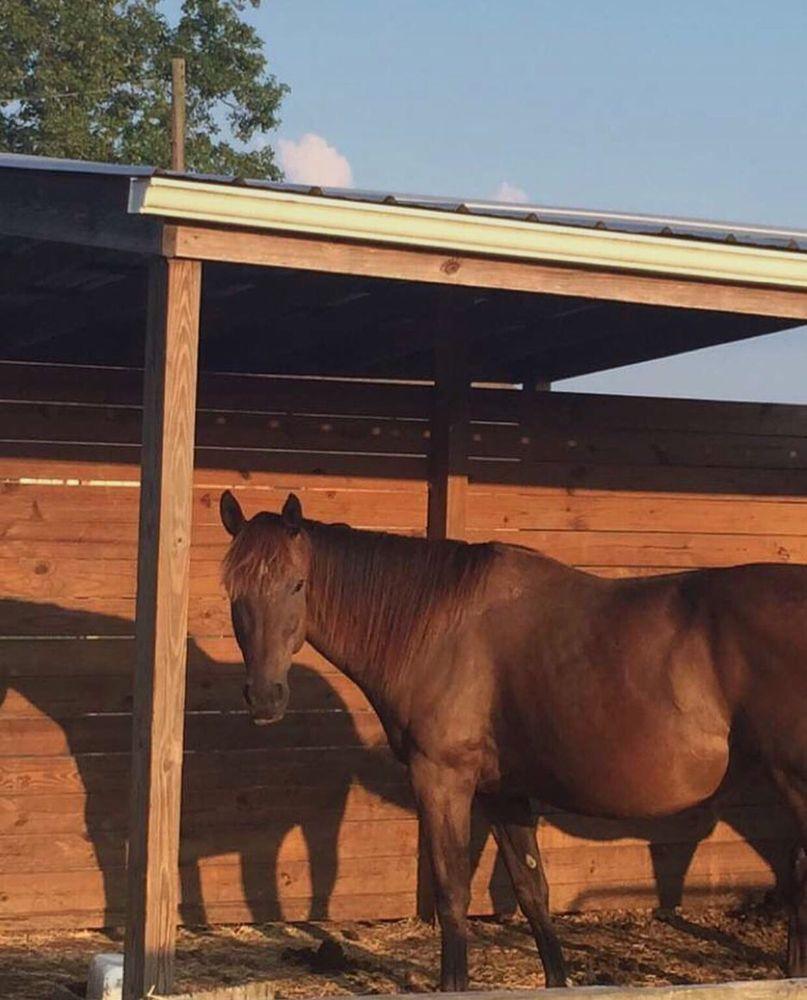 Triple Oak Ranch: 81024 Robinson Rd, Folsom, LA