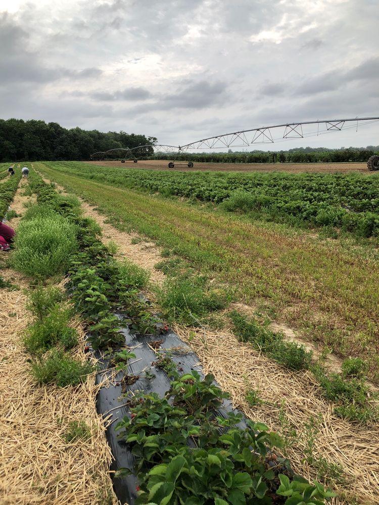 Godfrey's Vegetable Farm: 302 Leager Rd, Sudlersville, MD