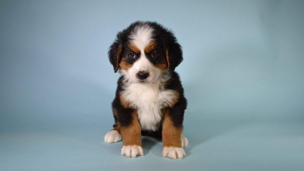 Kevin E. Miller - Dog Breeder: 1580 State Highway 133, Arthur, IL