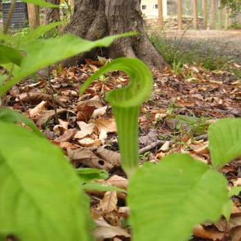 Photo of North Carolina Botanical Garden - Chapel Hill, NC, United States. Pitcher