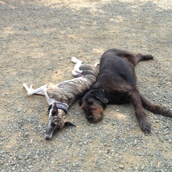 Dog Grooming Yuba City