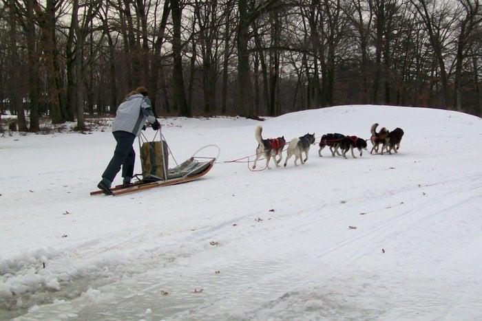 Arctic Paws Dog Sled Tours: 393 Manor Dr, Pocono Manor, PA