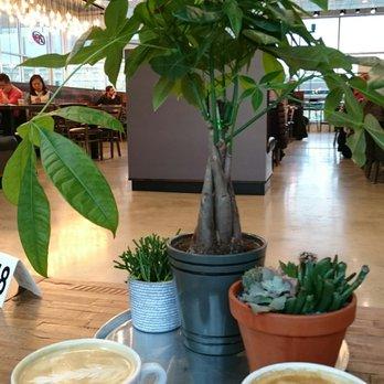 Pressed Cafe Burlington Burlington Ma