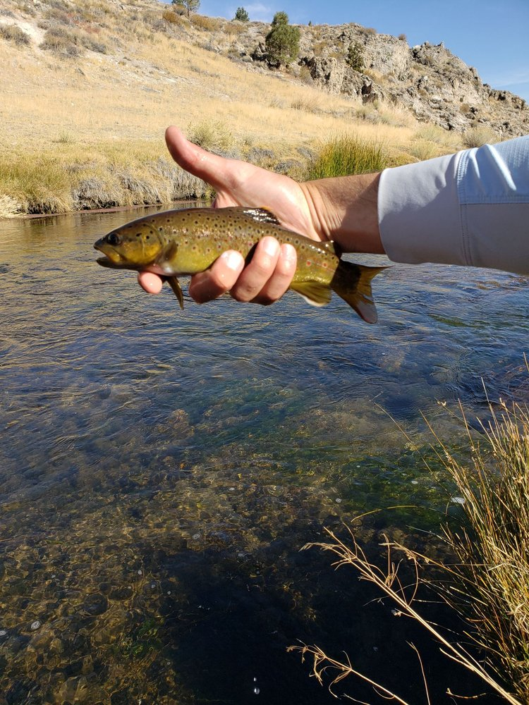 The Trout Fly & Troutfitter: Hwy 203 And Old Mammoth Rd, Mammoth Lakes, CA