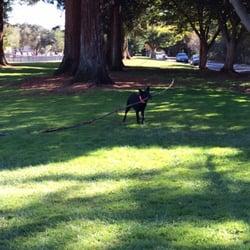 Dog Parks In Los Altos Ca