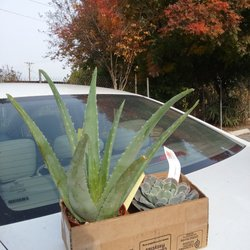 Photo Of Bellefontaine Nursery Pasadena Ca United States Bought These For My